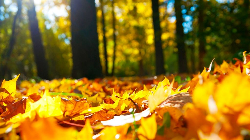 10-beautiful-autumn-wallpapers