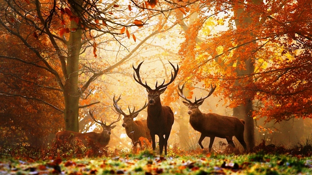 11-beautiful-autumn-wallpapers