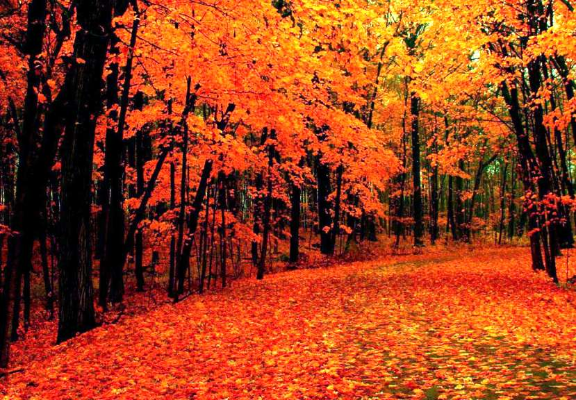 12-beautiful-autumn-wallpapers