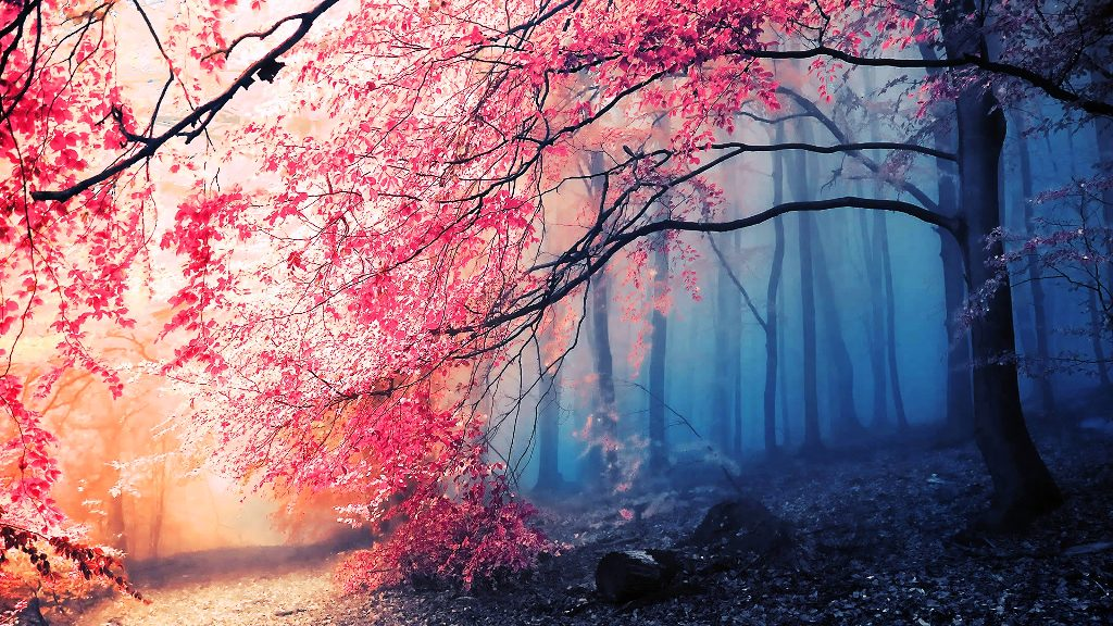 13-beautiful-autumn-wallpapers
