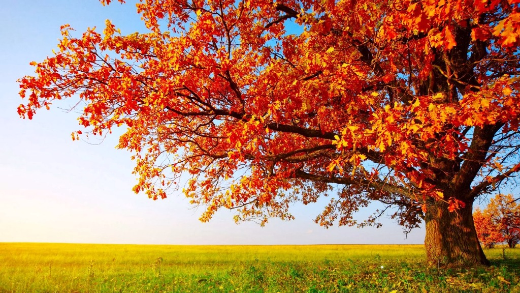 4-beautiful-autumn-wallpapers
