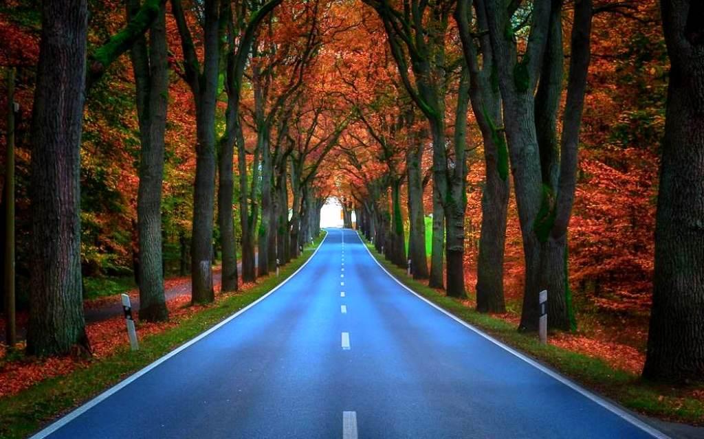 11-tree-tunnels
