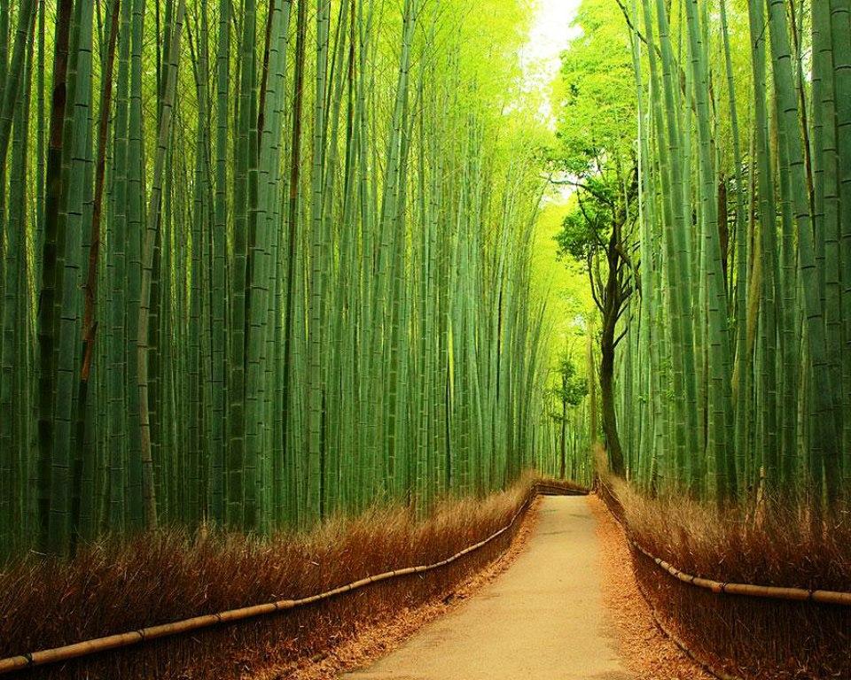12-tree-tunnels
