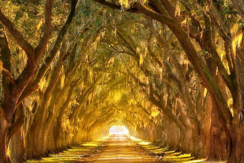 14-tree-tunnels