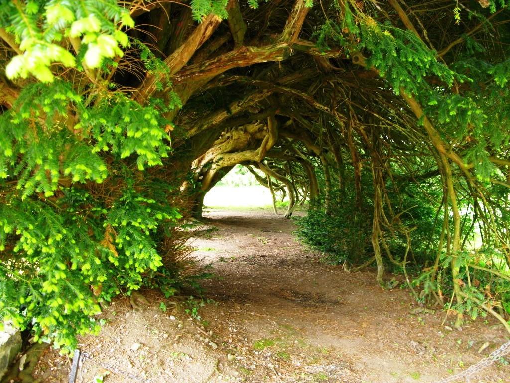15-tree-tunnels