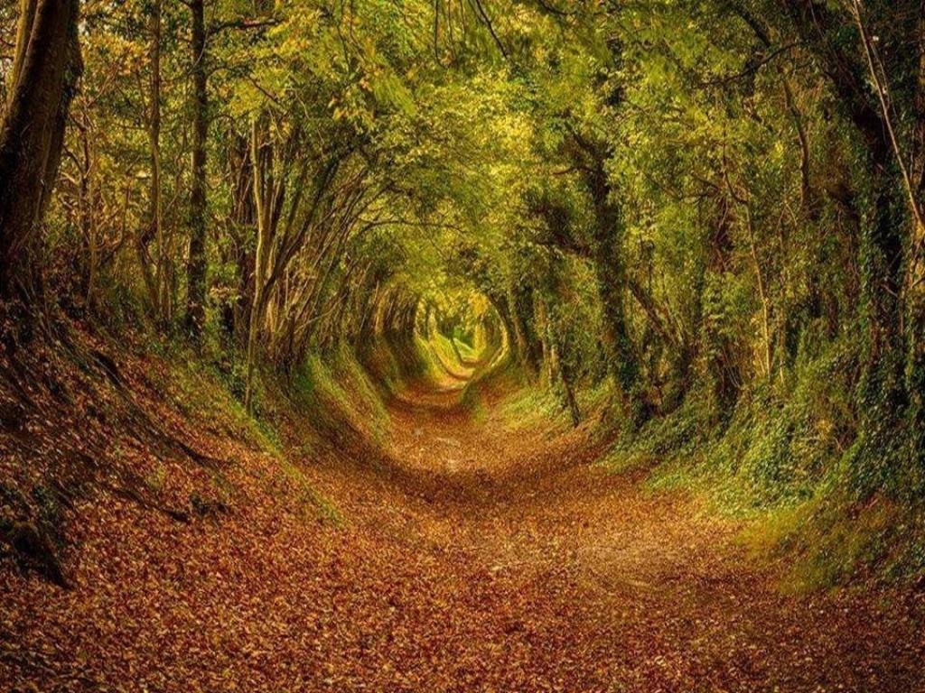 16-tree-tunnels