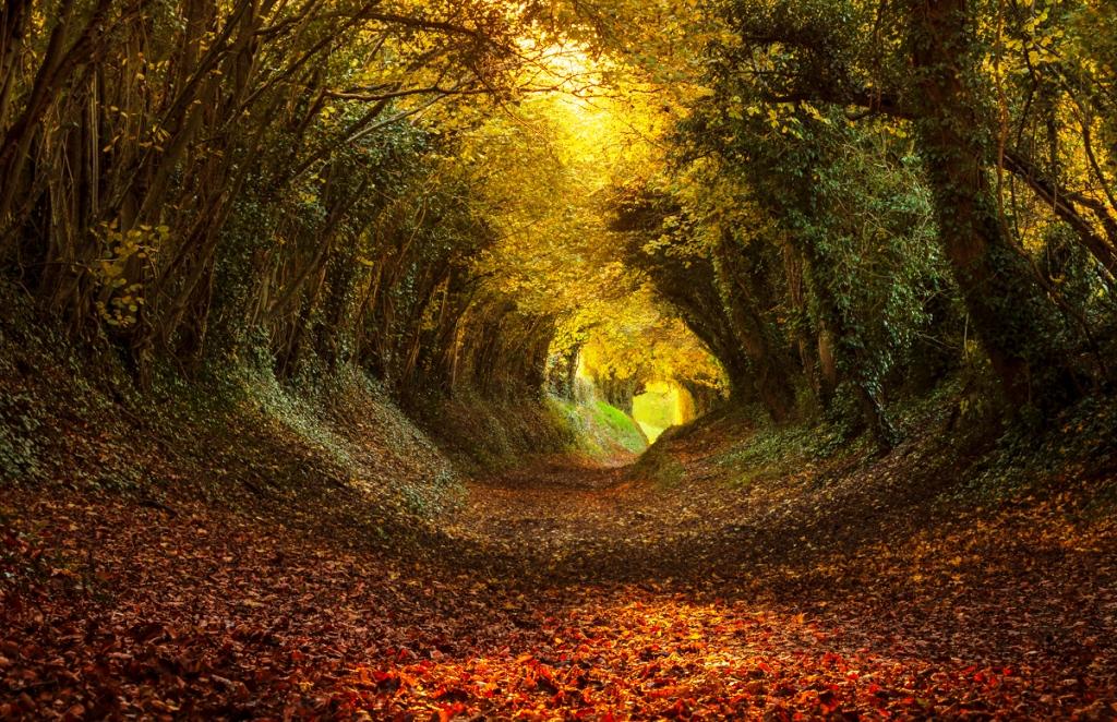 17-tree-tunnels
