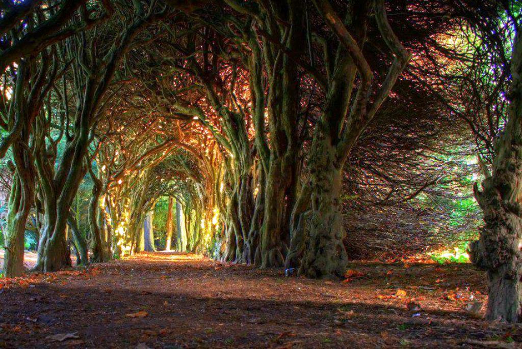 18-tree-tunnels