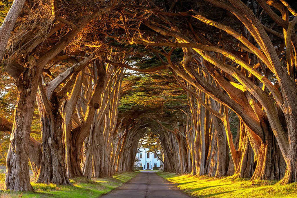 19-tree-tunnels