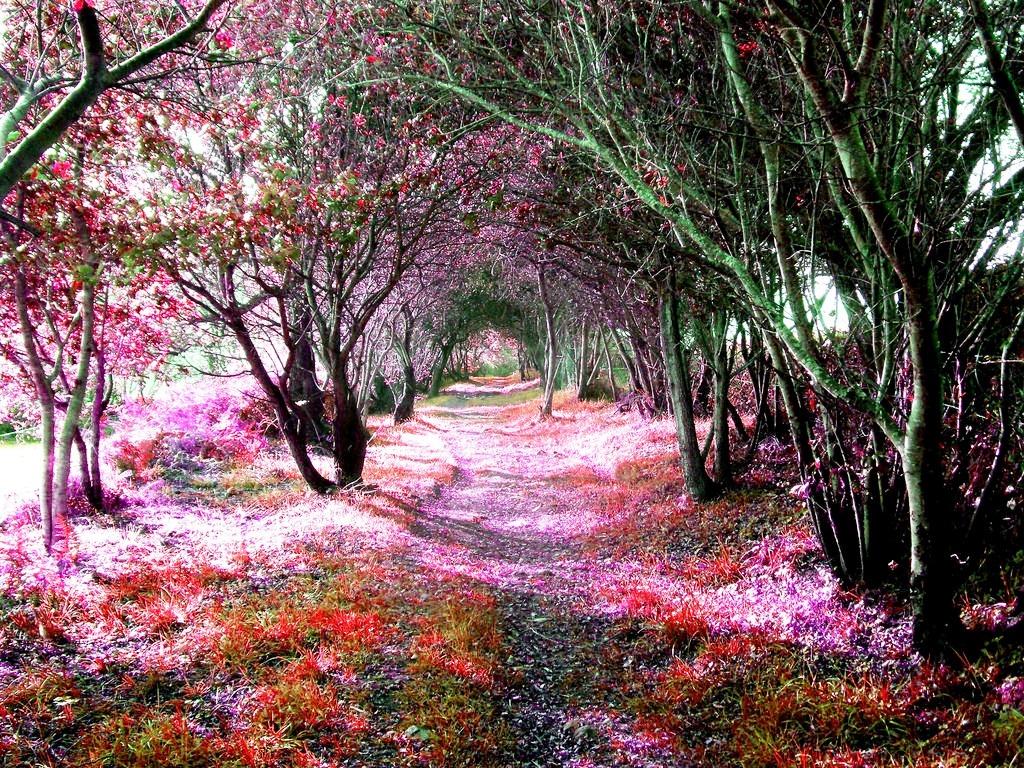 20-tree-tunnels
