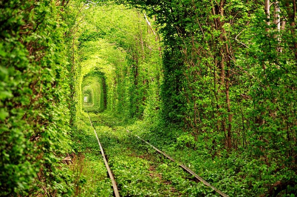 21-tree-tunnels