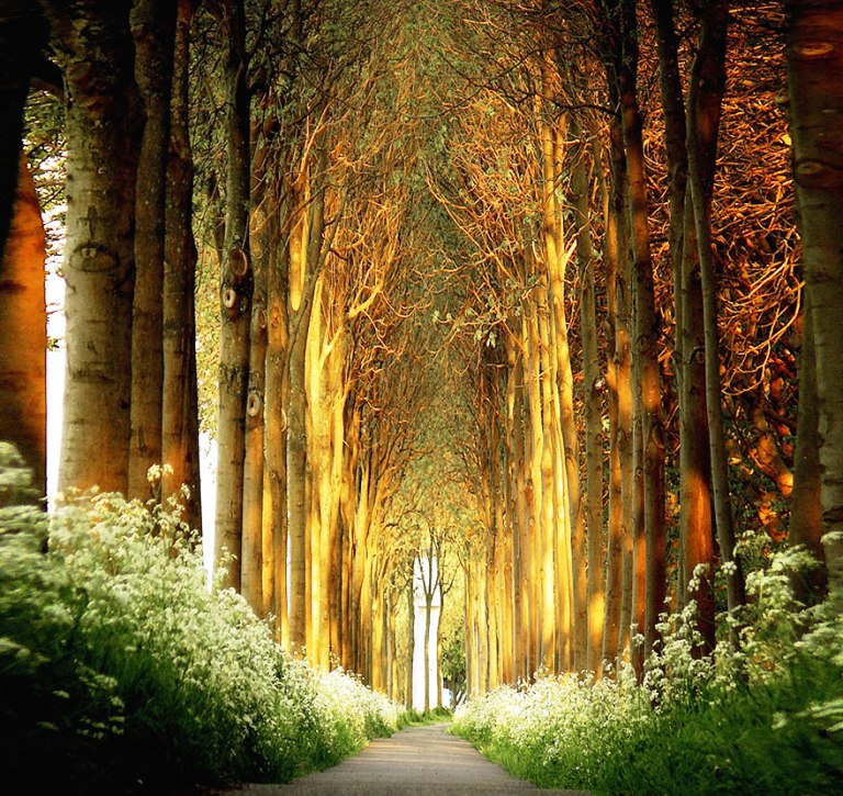 22-tree-tunnels