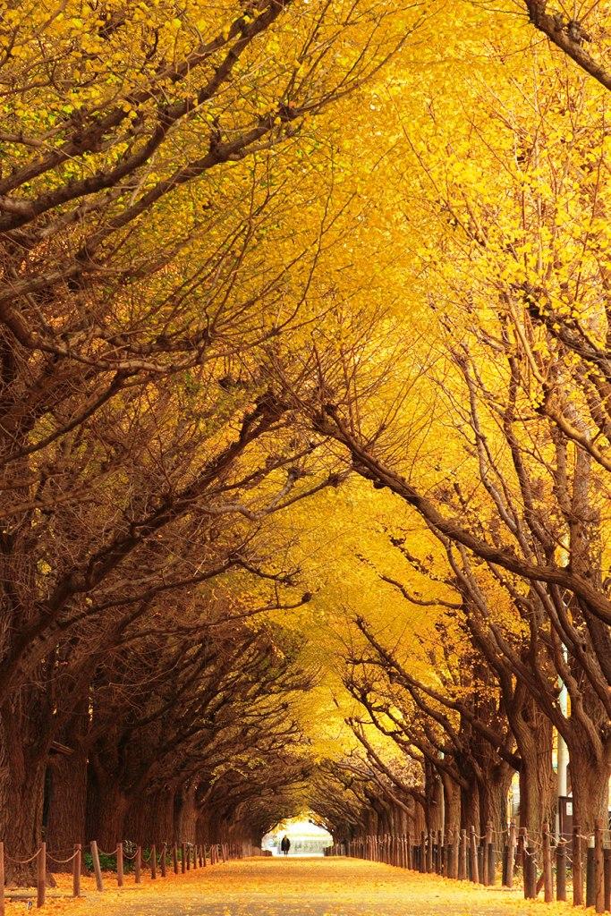 23-tree-tunnels