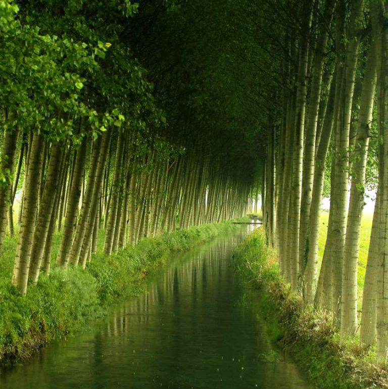 3-tree-tunnels