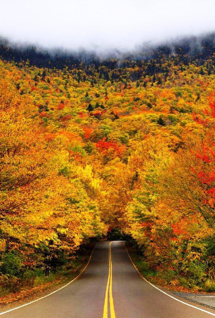 4-tree-tunnels