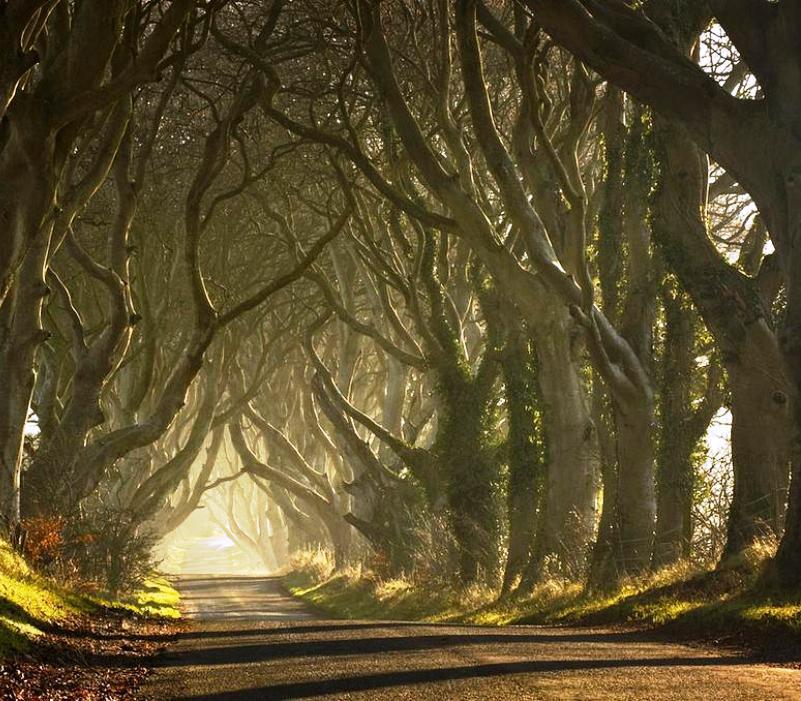 6-tree-tunnels