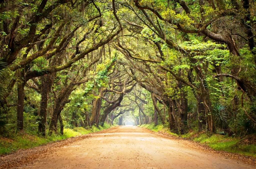 7-tree-tunnels
