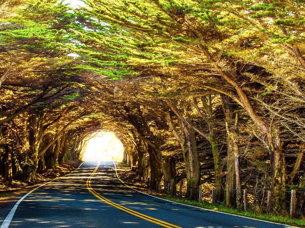 8-tree-tunnels