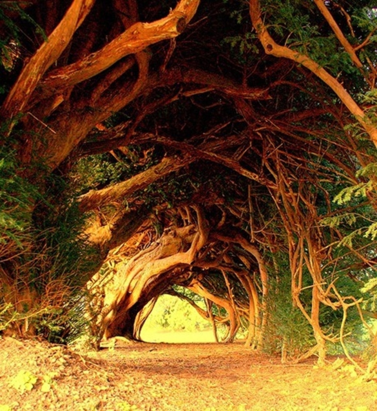 9-tree-tunnels