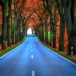 20 Beautiful Tree Tunnels Wallpapers