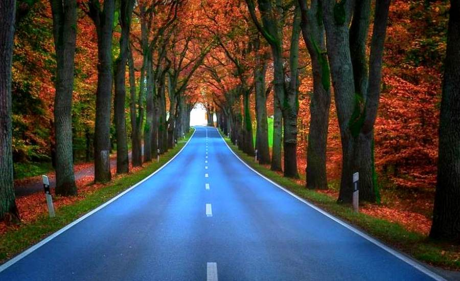 tree-tunnels