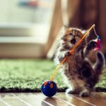 25 Adorable Cat Photos For Inspiration