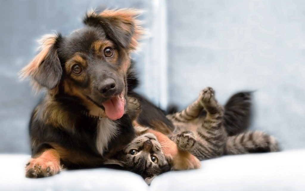 adorable-dog-and-cat