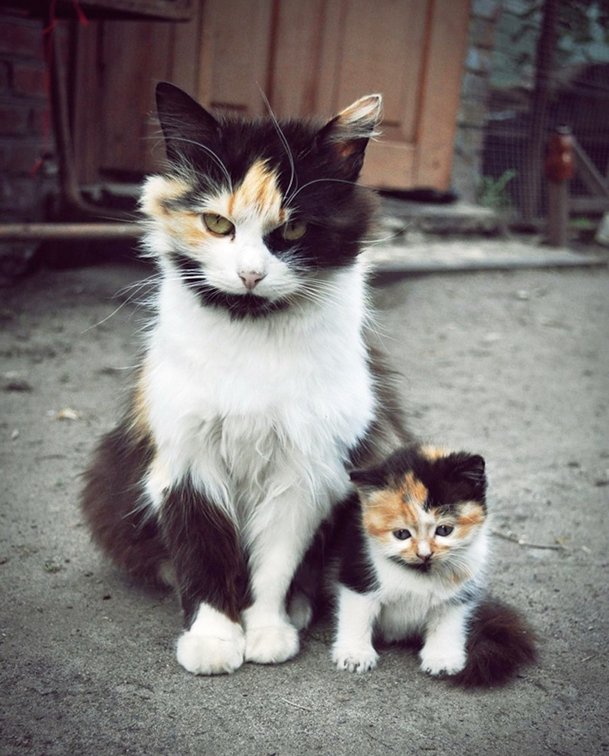 cat-and-mini-me-counterpart