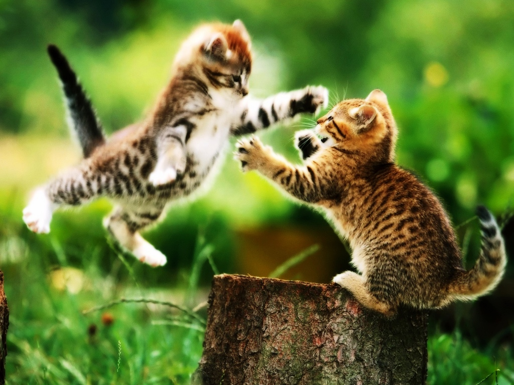 cat-fighting