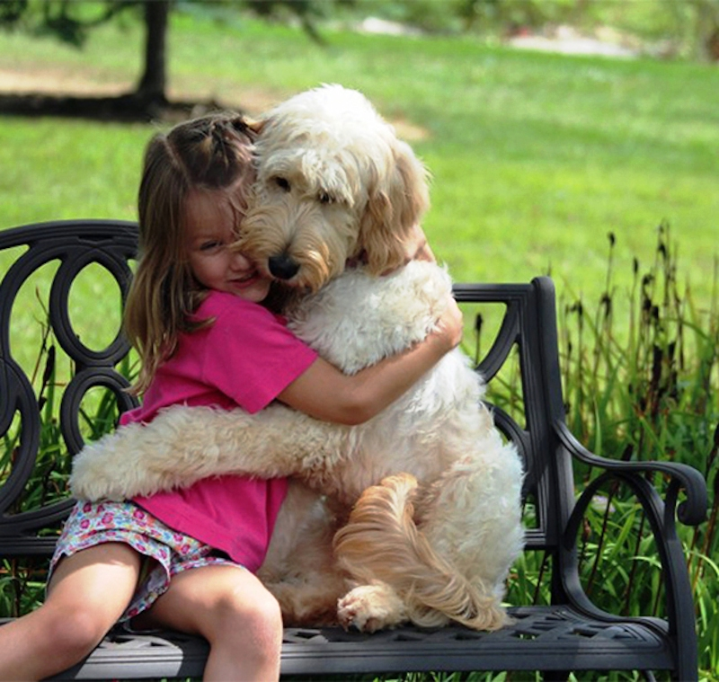 dogs-hugging-humans-98