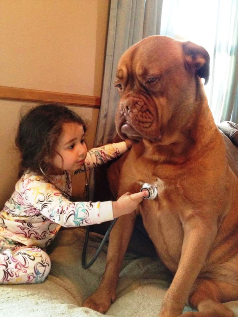 kid-playing-doctor-with-dog