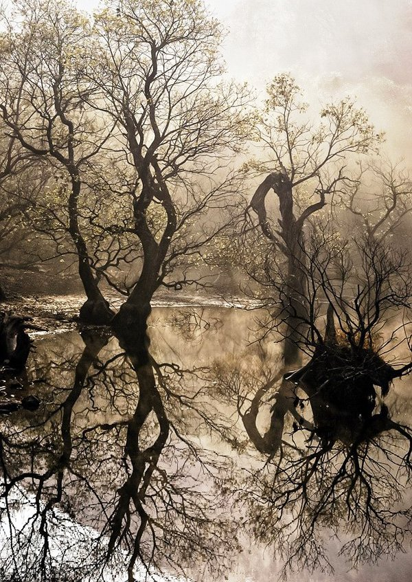 mind-blowing-forest-photography