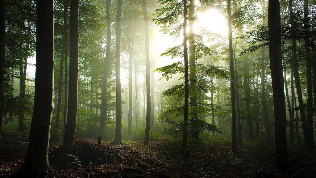 beautiful_forest