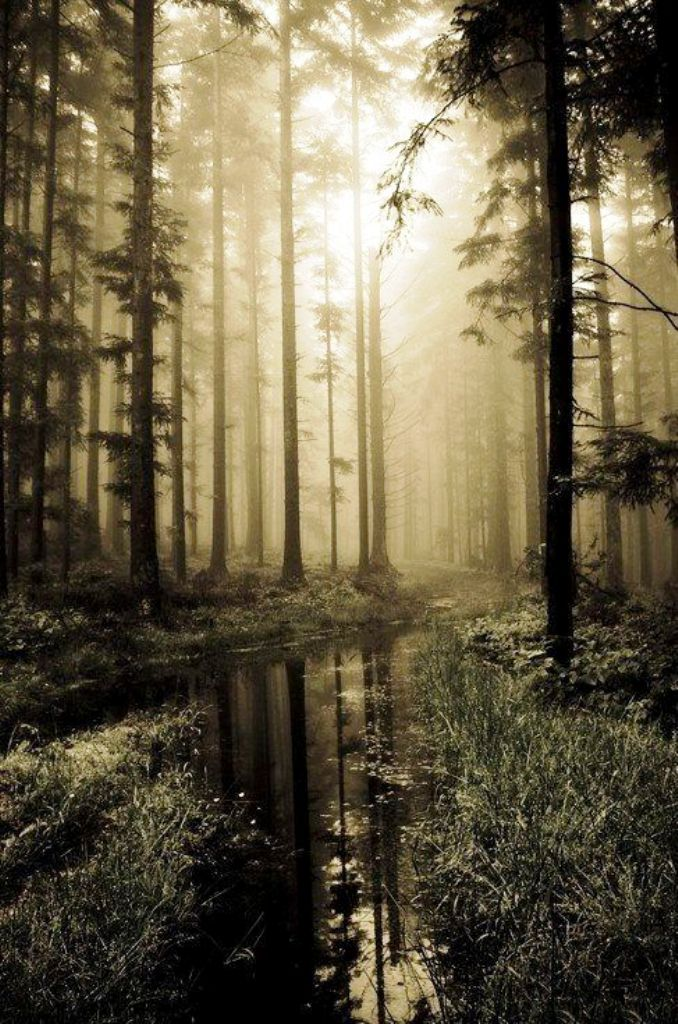 early-sunrise-forest-photography