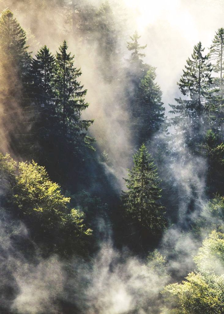 foggy-forest-photography