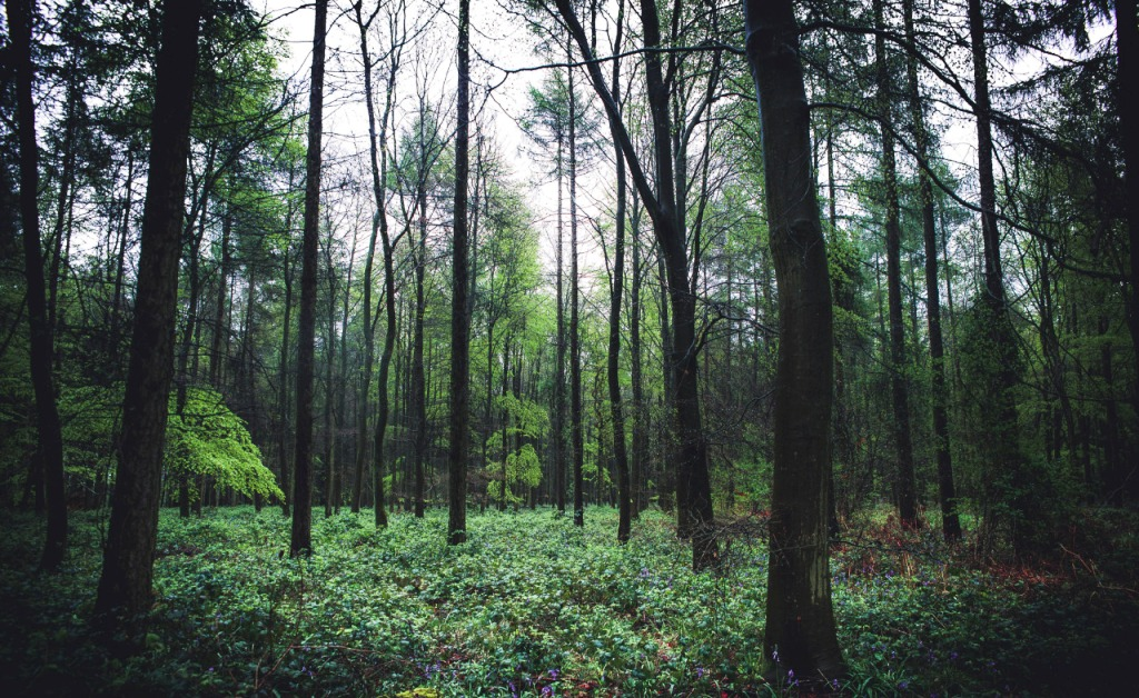 forest-photography-idea