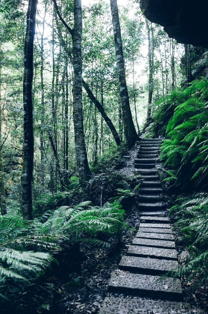 forest-photography-ideas