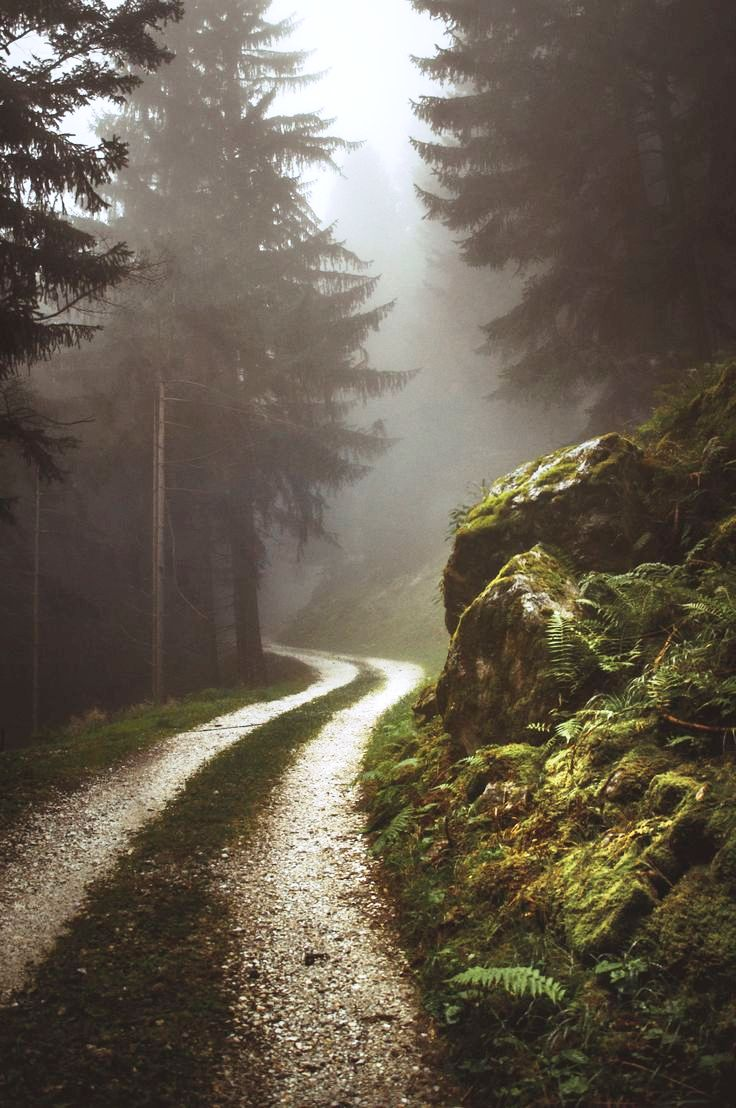 forest-road-photography
