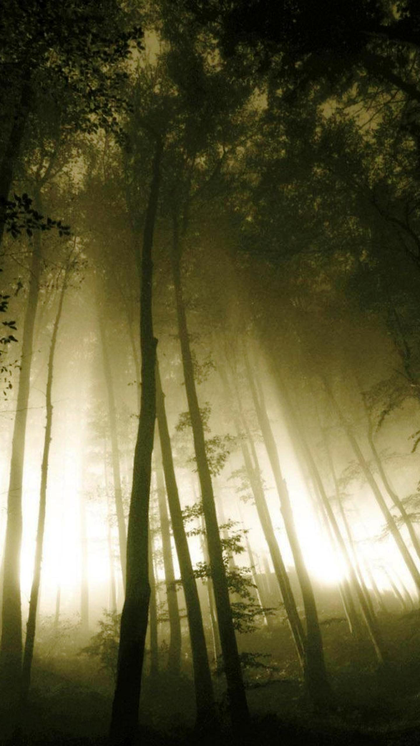 forest_tree_dark_forest_photography