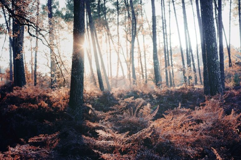 20 Forest Photography Ideas For Your Inspiration