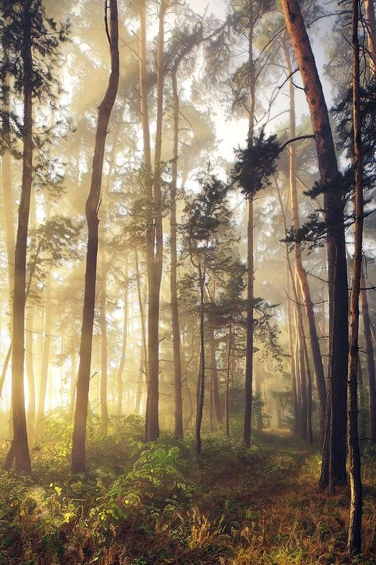 morning-forest-photography