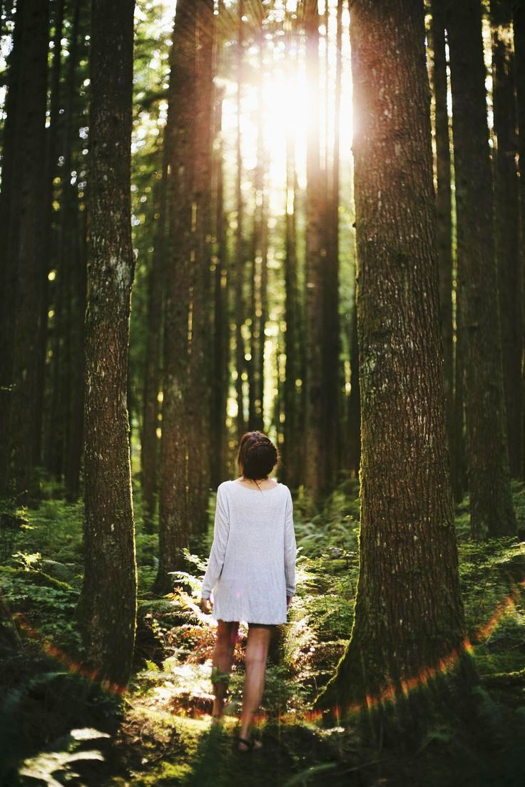 new-rise-forest-photography