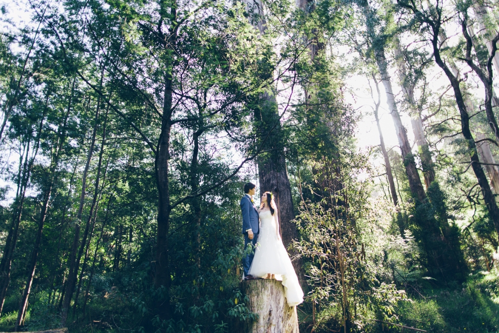 wedding-photography-nature-forest-melbourne