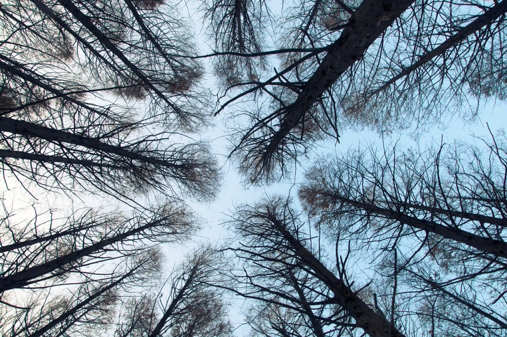 winter-forest-tumblr