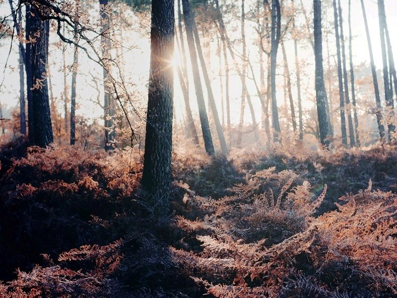 Mind Blowing Forest Photography Ideas inspiredluv (18)