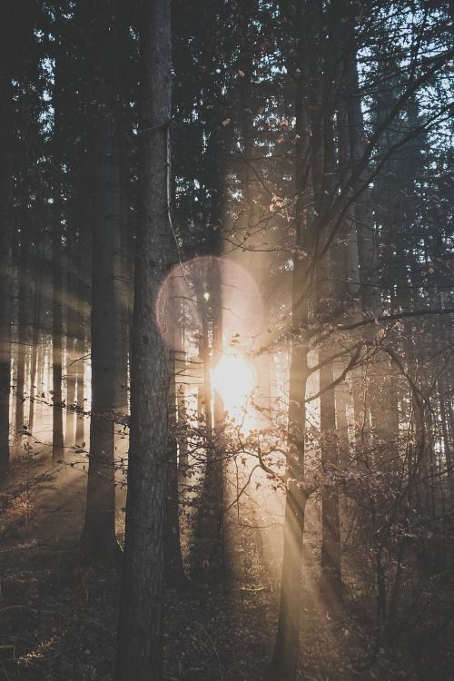 Mind Blowing Forest Photography Ideas inspiredluv (4)