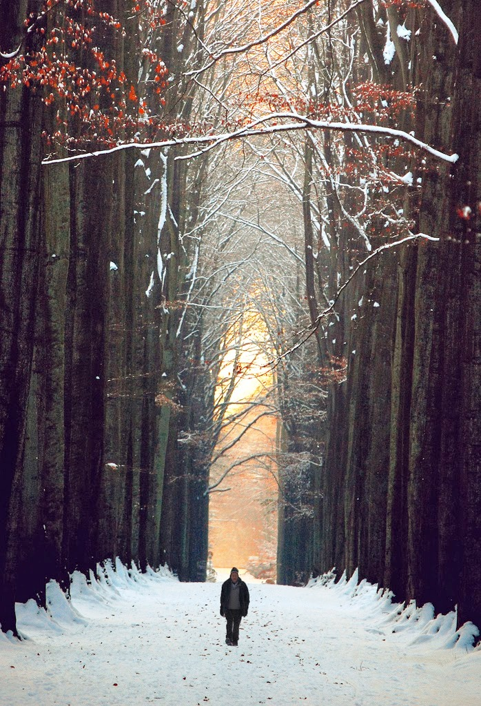 Mind Blowing Forest Photography Ideas inspiredluv (8)