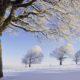 Winter Park Nature Parks Snow Wallpaper Wide