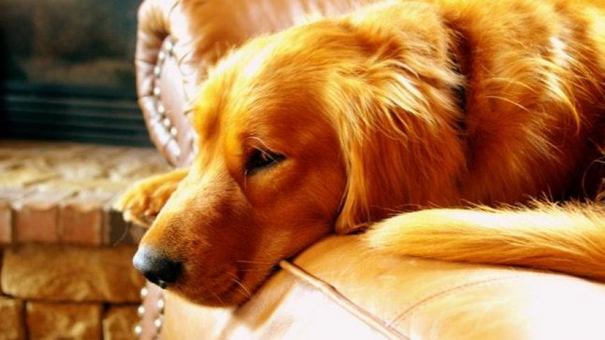 CBD OIL FOR CANCER IN DOGS
