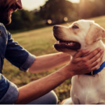 How CBD Can be Helpful for Dogs with Cancer
